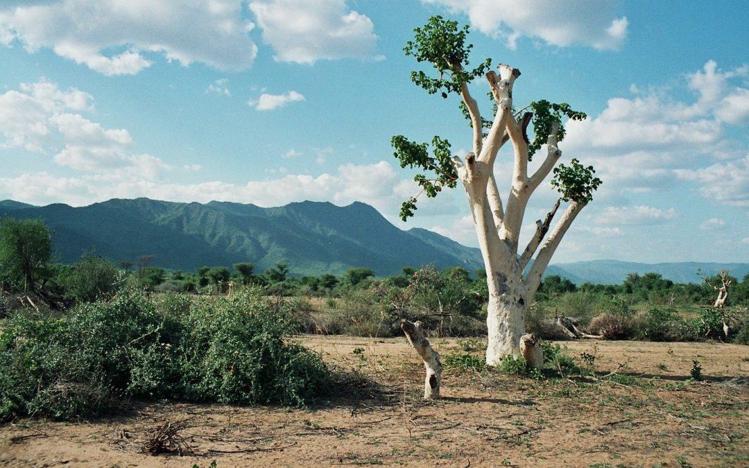 OP FOTOSAFARI IN ETHIOPIË